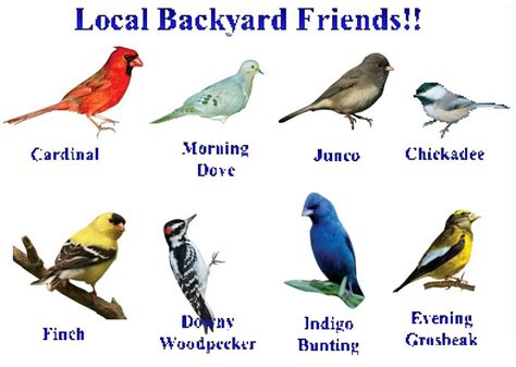 types of backyard birds world bird sanctuary november 2011