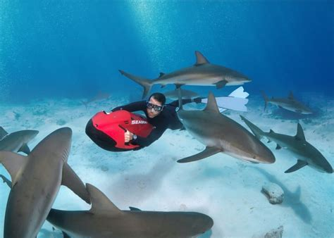 dive shark stuart cove s dive bahamas introduce shark diving with seabob