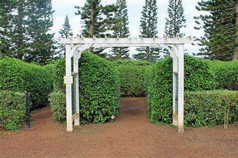 patio dole dole pineapple garden maze1 projekt gesund leben