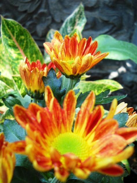 Jual Cermin Hias Bali putra garden galeri tanaman hias untuk rumah anda