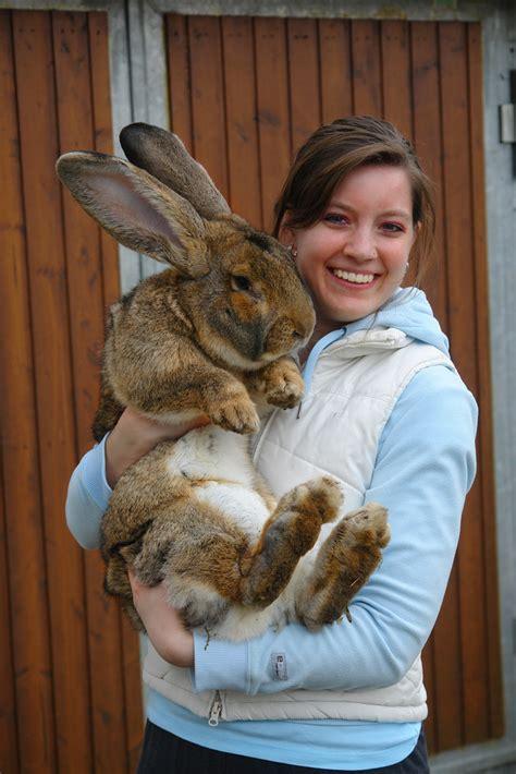 wann sind kaninchen ausgewachsen meine schwester mit ihrem osterhasen samson foto bild