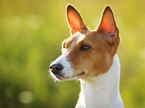 interesting facts about dogs 10 more facts about dogs you probably didn t