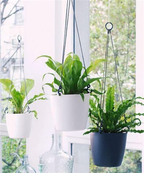 Plante Pour Salle De Bain Sans Fenetre by Plante Pour Salle De Bain Sans Fenetre 6 Quelle Plante