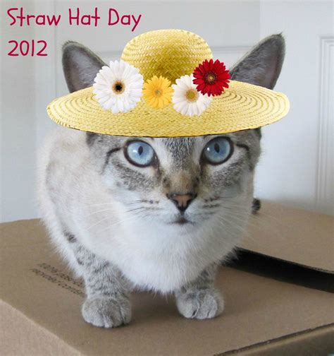 Cat Baby Hat kc the giggleman happy straw hat day baby cat