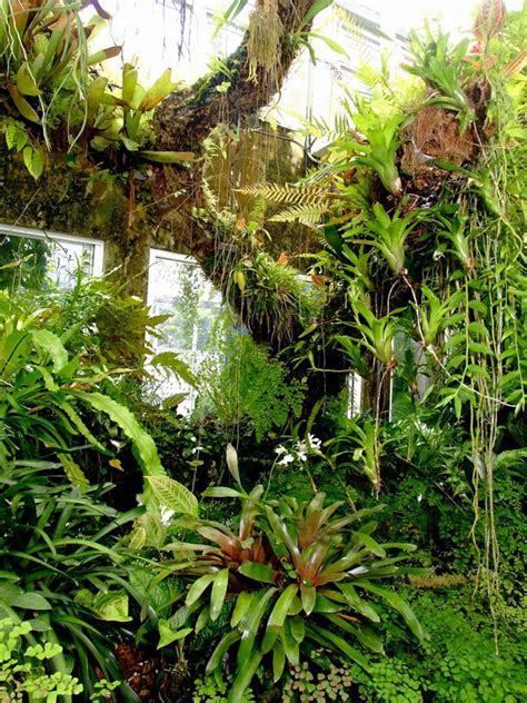25 best ideas about plants in the rainforest on pinterest rainforest plants rainforest