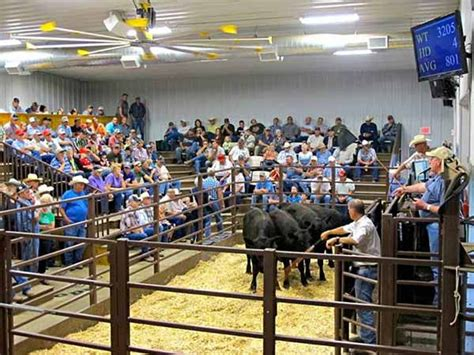 livestock auction 40 best images about cattle auction barns sale barns on