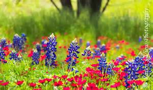 colors of spring colors of spring in texas raven s view photography