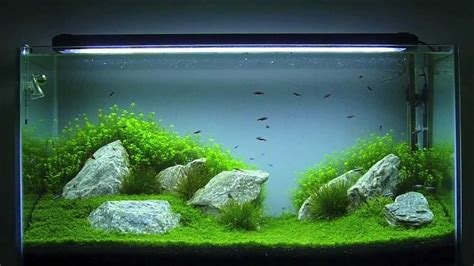 Aquascape 0 7 Co2 aquascaping aqu 225 plantado 200 litros hd