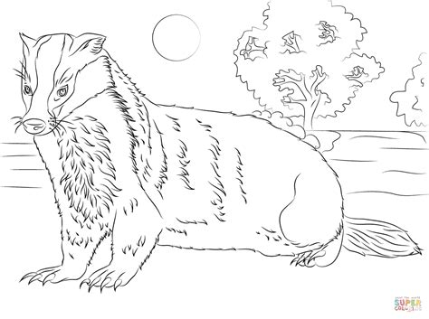 badger color badger printable coloring pages