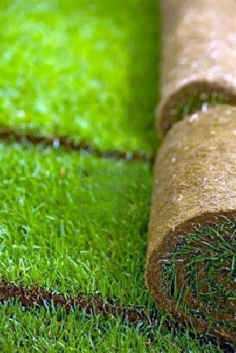 tappeto erboso prezzi foto tappeti erboso di floricoltura