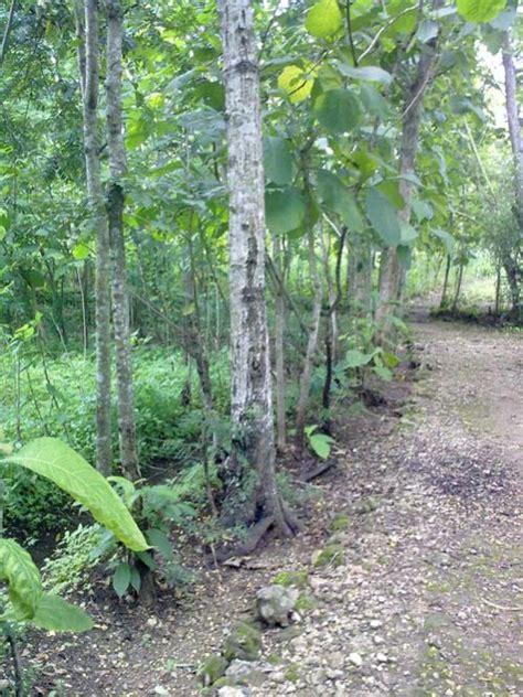 Dijual Tanah Di Wonosari Gunungkidul Luas 676 M Nego tanah dijual tanah pekarangan shm di piyaman wonosari gunungkidul