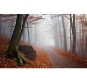 Landscape Nature Fall Mist Forest Path Sunrise