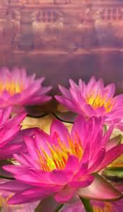 Lotus Flower Tab 600x1024 Pink Lotus Flowers Galaxy Tab 2 Wallpaper