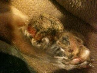 paw pad peeling dogs paws