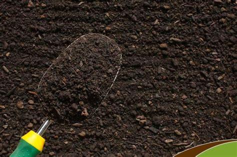 terriccio per limoni in vaso terra per limoni materiali per il giardino