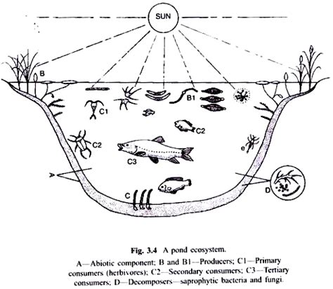 the biology of lakes and ponds biology of habitats series books pond and lake as ecosystem with diagram