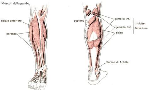 eliminare cellulite sedere eliminare il grasso addominale gambe glutei fianchi