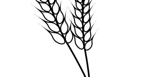 nature wheat coloring page  kids printable