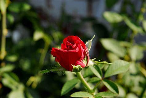 fotografie giardini fiori in giardino fotografie