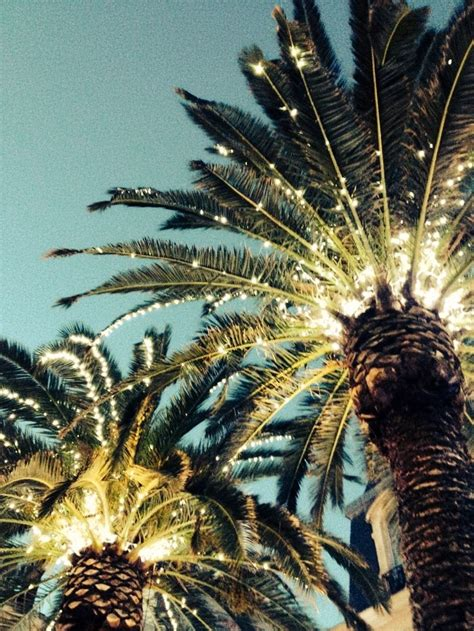 palm trees with lights 1000 ideas about california palm trees on