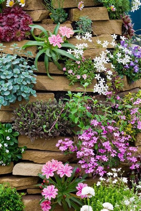 Rock Garden Walls Rock Garden Plants In Crevices Including Alpines Mix In Wall Tower Lewisia Phlox