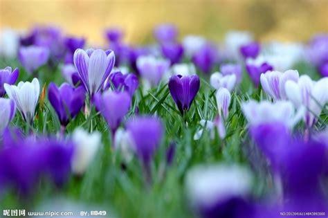 Jns May Real Pict 紫色的花摄影图 花草 生物世界 摄影图库 昵图网nipic