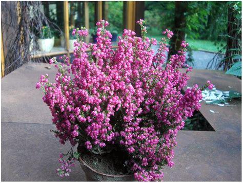 Pflanzen Winterhart Balkon by Winterharte Pflanzen Fur Balkon Und Terrasse Hauptdesign