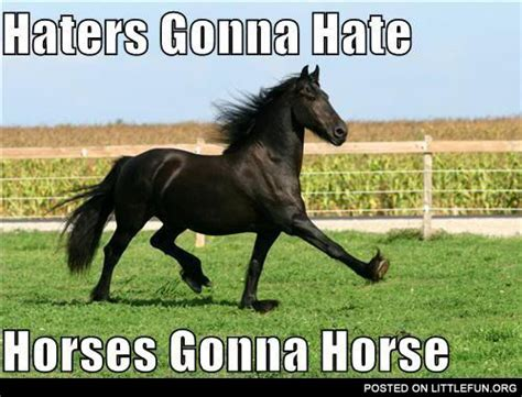 Gay Horse Meme - littlefun haters gonna hate horses gonna horse