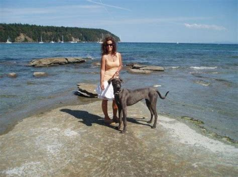 great dane puppies kentucky blue great dane puppies for sale puppy kentucky symsonia ky
