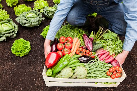 6 Tips For Growing Your Own Vegetable Garden Growing Your Own Vegetable Garden