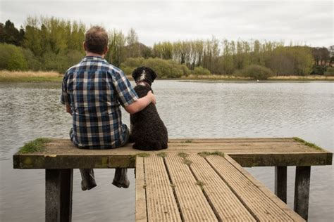 dogs are loyal 10 most loyal breeds pawculture