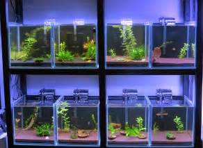All about betta fish: Partitioned Betta fish tank setup