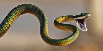 Black Snake In Backyard Isis Lady Of The Holy Cobra Isiopolis