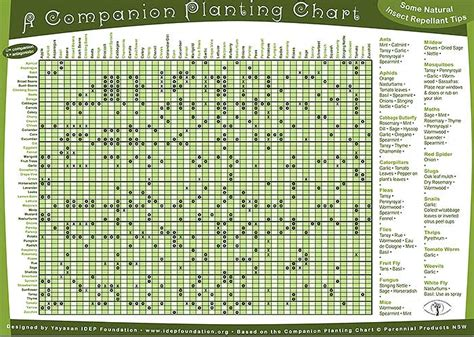 Container Gardening Guide - permaculture companion planting guide chart free pdf off grid world