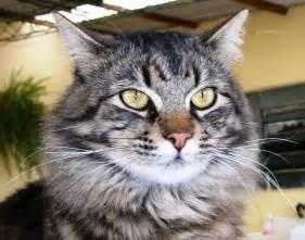 File:Gato meditando.jpg - Wikipedia Gato