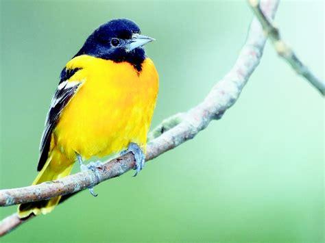 imagenes de aves asombrosas la importancia de las aves en el medio ambiente energiverde