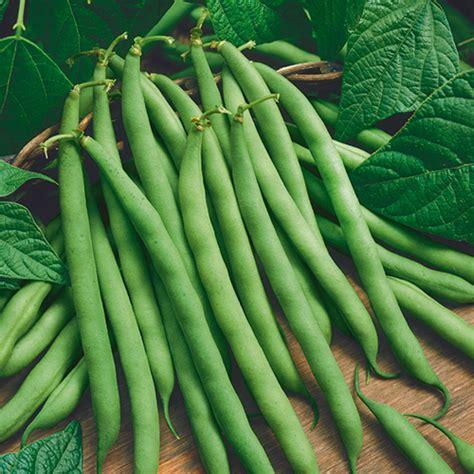 bush beans organic provider bush bean home farmer