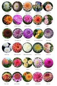 list of flowers flowers list