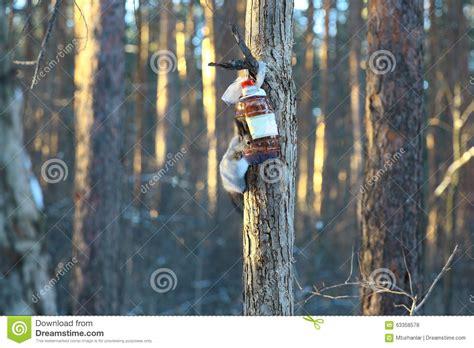 immagini di sull albero scoiattolo sull albero con neve fotografia stock