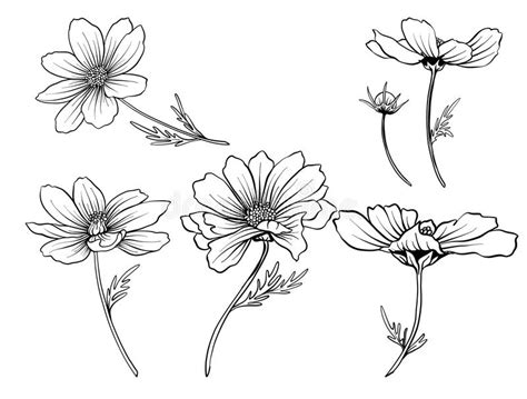cosmos flowers set of outline flowers stock vector