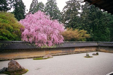 the rock garden file cherry blossom at the rock garden of ry蜊an ji temple