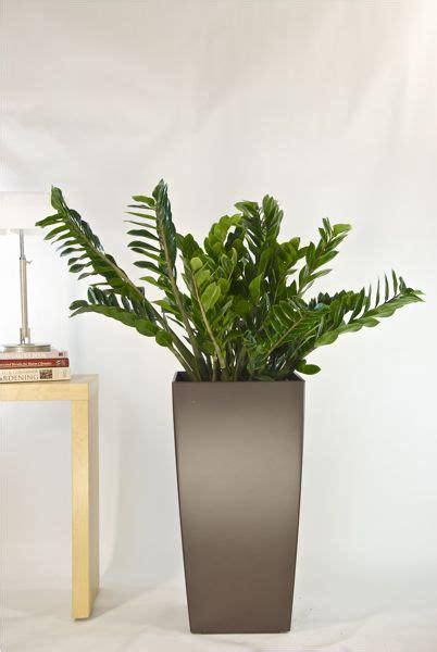 41 best office plants images on pinterest gardening 9 best images about house and office plants on pinterest