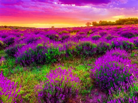 purple landscape pictures  pin  pinterest pinsdaddy