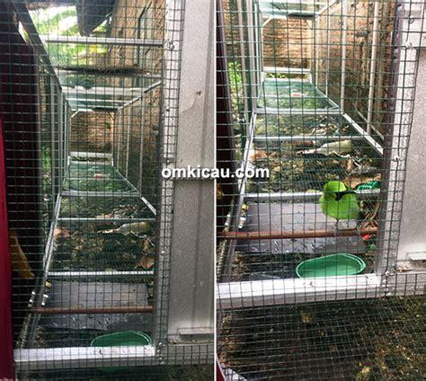 Kandang Sangkar Jangkrik Bulat cucak ijo new shenox burung jawara milik om indro habib