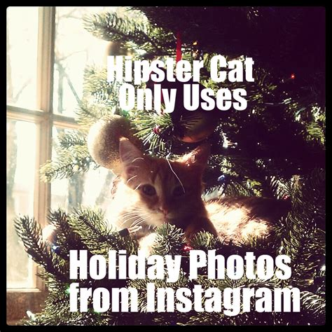 Cat Christmas Tree Meme - cute kitten meme instagram cat with christmas memes about