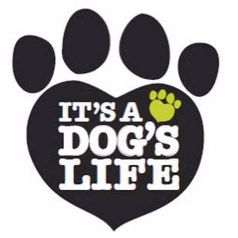 its a dogs its a dogs sitters in liverpool l11 dogbuddy