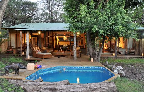 backyard safari company backyard safari company 28 images backyard safari