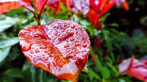 wallpaper leaves   wallpaper drops rain autumn