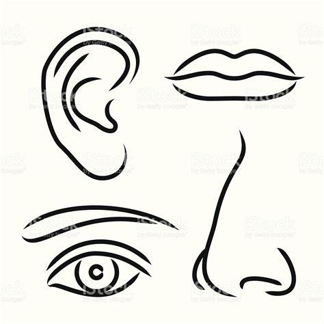 imagenes ojos nariz boca orejas ilustraci 243 n vectorial o 237 do nariz boca y los ojos arte