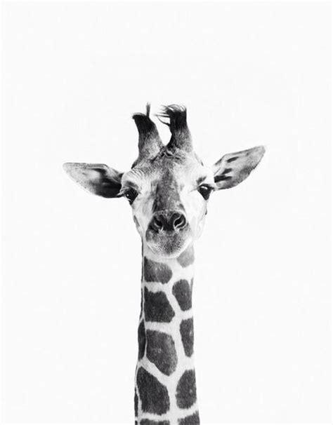 giraffe wallpaper pinterest giraffes backgrounds and iphone 5s on pinterest